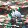 Wood Stork and Roseate spoonbill