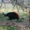 Zoo_1-25-16_022