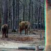 Zoo_1-25-16_002