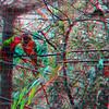 Zoo_1-25-16_021