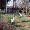 Zoo_1-25-16_023
