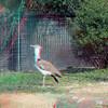 Zoo_1-25-16_016