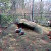 Zoo_1-25-16_012