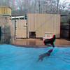 Zoo_1-25-16_015