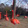 Zoo_1-25-16_030