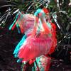 Zoo_1-25-16_020