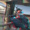 Zoo_1-25-16_018