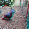 Zoo_1-25-16_024