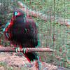 Zoo_1-25-16_006