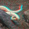 Albino timber rattlesnake-004