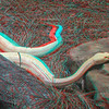 Albino timber rattlesnake-006