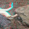 Albino timber rattlesnake-002