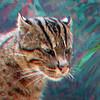 Fishing cat-302