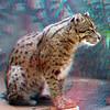 Fishing cat-301