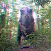 Tyrannosaurus_Rex02