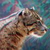 Fishing cat-303