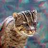 Fishing cat-304