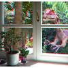 Dilophosaurus outside the window
