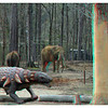 Edmontonia in the elephant enclosure.