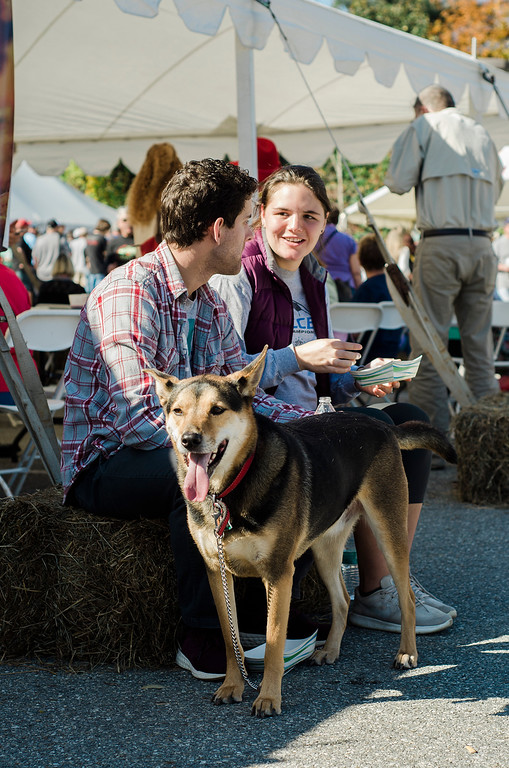 . Mumford the German Shepherd waits for a morsel to drop while waiting with owners Ian and Kristen Hanlon during the 3rd annual Westminster Cracker Festival on Saturday, October 21, 2017. SENTINEL & ENTERPRISE / Ashley Green