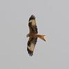 (wild), Animals, Birds, Marwell Zoo, Sandpiper - 30/03/2016