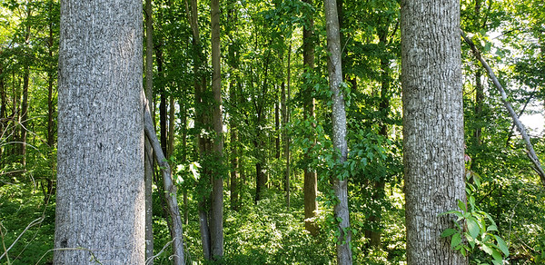 2.5 acres nicely wooded in mature timber