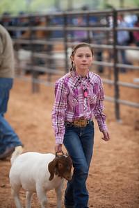 Hays_County_Show-6623
