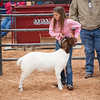 Hays_County_Show-6602