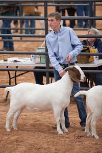 Hays_County_Show-6651