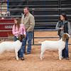 Hays_County_Show-6599