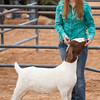 Hays_County_Show-6604
