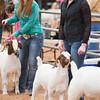 Hays_County_Show-6590