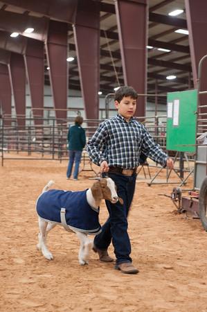 Hays County Livestock Show, 2014