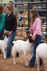Hays_County_Show-6596