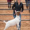 Hays_County_Show-6603