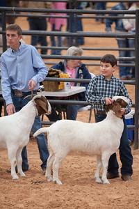 Hays_County_Show-6657