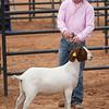Hays_County_Show-6600