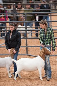 Hays_County_Show-6648
