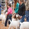 Hays_County_Show-6597