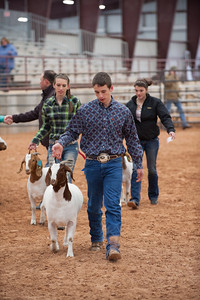 Hays_County_Show-6679
