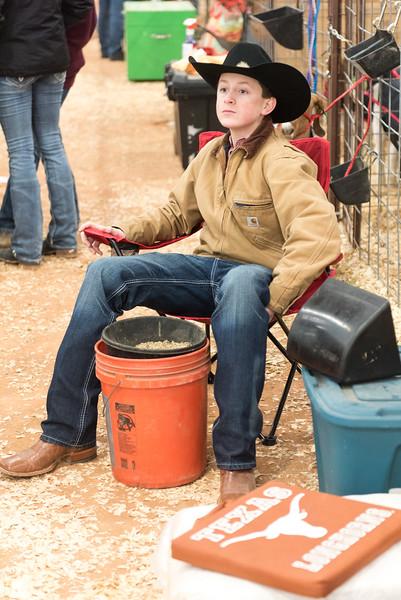 Hays-County-Show-6029