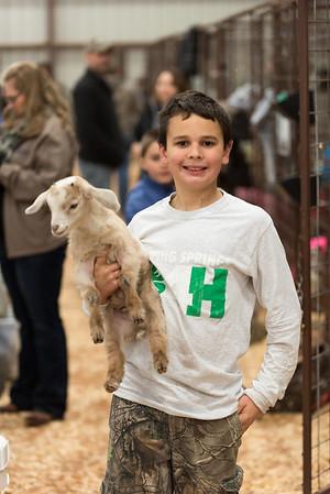 Hays-County-Show-6085