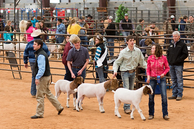 Hays-County-Show-6151