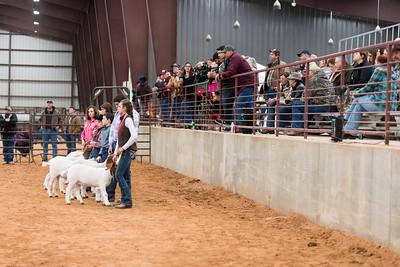 Hays-County-Show-6119