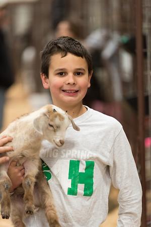Hays County Livestock Show, 2016