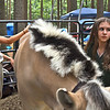 4-H'ers Sophie Galvine 12 of Lexington and Kristina Kane 12 of Carlisle and both from the Flying Change Stables in Chelmsford, groom up the horse Jerry they will be riding in the horse show. SUN/ David H. Brow