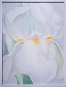 Lirio blanco nº 7 (Georgia O'Keeffe)
