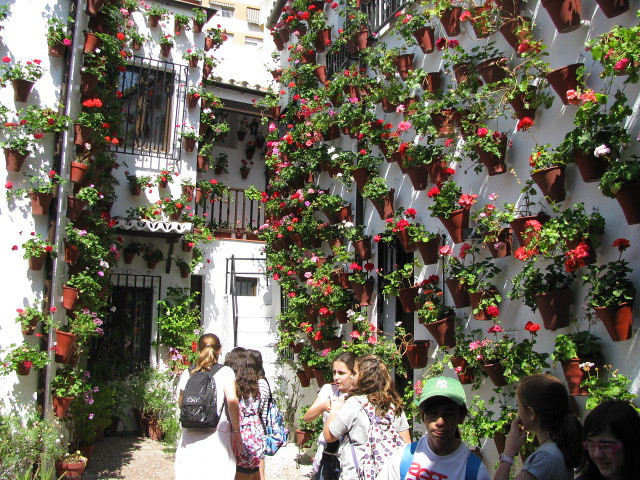 "The ""Cordoba patio"" was taken while the patio decoration contest was in full swing. This was one of the most decorated patos and was full of middleschool kids on a field trip, taking pictures, talking, and ignoring their teachers. People, noise, color, and beauty - Spain!"