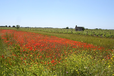 On the road to Castellana, Puglia, Italy