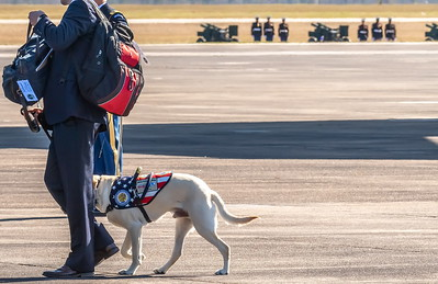 """Sully walks """"in step"""" with his handler to board Air Force One for the final time"""
